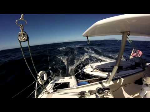 Downwind Sailing on Catamaran QUIXOTIC - 12 Knots!  with Dolphins!