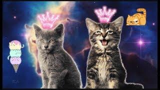 Песня котят.😊