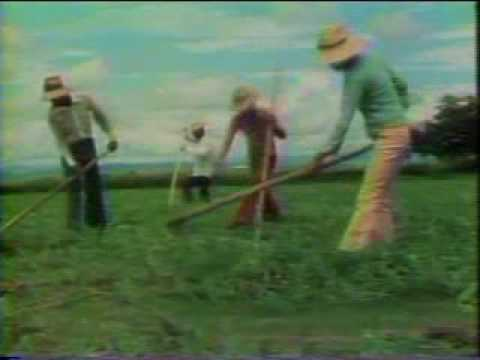 Pesticide Poisoning Farmworkers in Central America 1982
