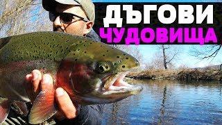 ДЪГОВИ ЧУДОВИЩА ПО 60 см Риболов на  балканска и американска пъстърва / trout / Forelle