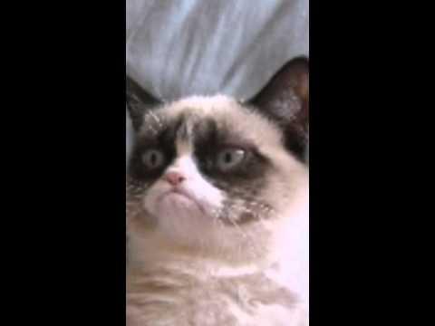 grumpy cat ball plush