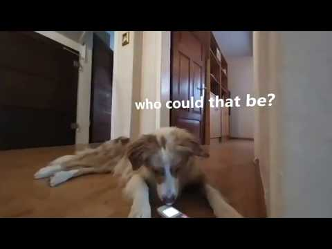Funny Dog Videos talking: Maxi is getting call, who could be? (VR180 3D)
