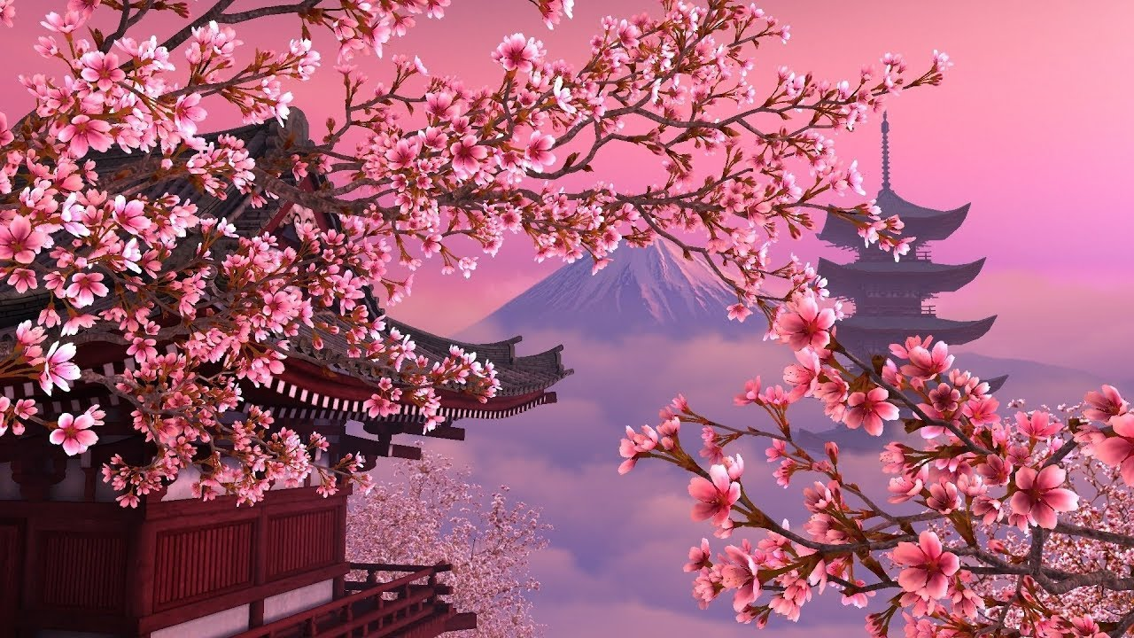 Image result for cherry blossom tree japanese