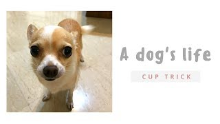 A dog's life - cup trick