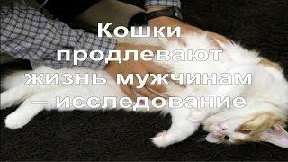 Как лечат кошки людей | Кошки продлевают жизнь мужчинам