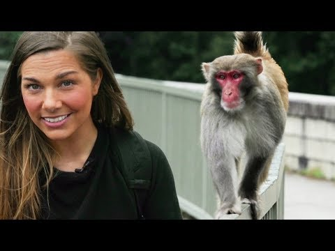 The Monkeys and Pink Dolphins of Hong Kong | Wild Cities with Hannah Stitfall | Earth Unplugged