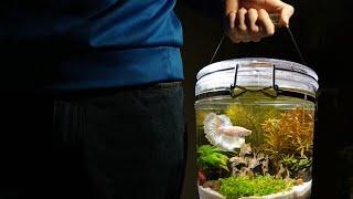 Portable Betta jar aquascape!!! No c02