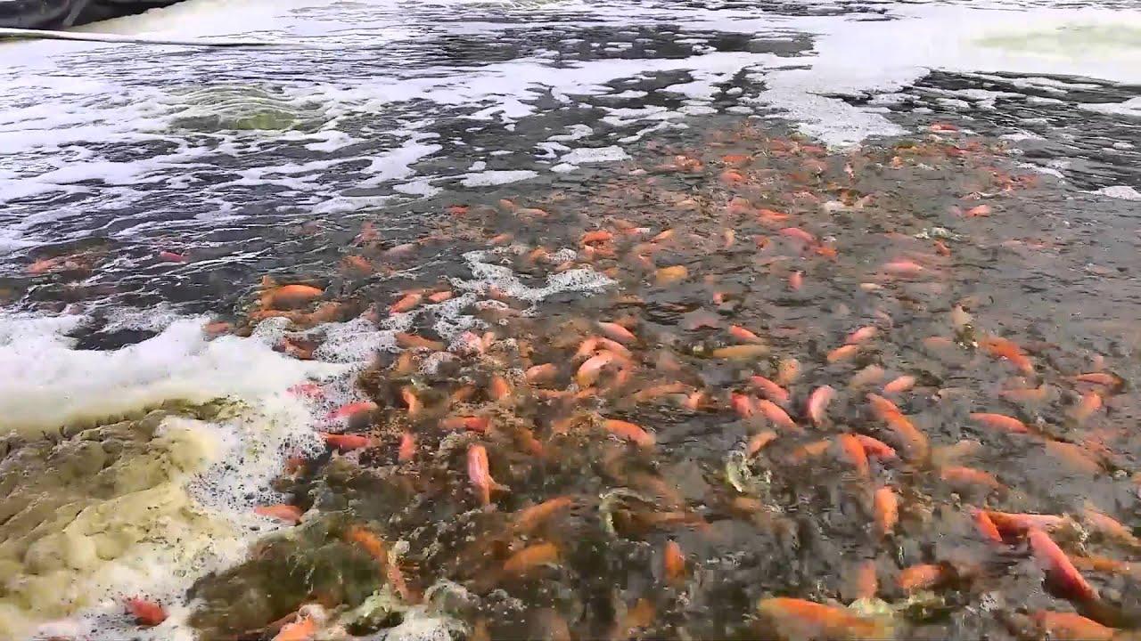 Sistemas acuicolas tanques espinal piscicultura Estanques para piscicultura