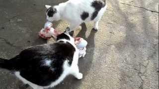 Прикол! Коты едят мясо и очень большую кость.Joke! Cats eat meat and a very large bone.