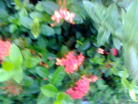 tamil nature song