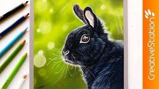 Bunny rabbit - Speed Drawing | CreativeStation