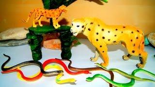Животные. Леопард и змеи. Игрушки. Видео для детей