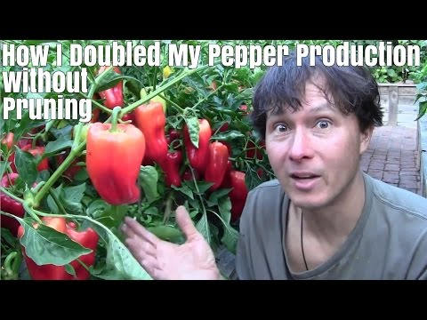 How I Doubled My Pepper Production without Pruning