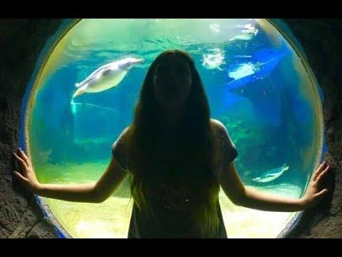 Sydney Aquarium 2019 Walk-through - INCLUDES NEW BARRIER REEF ATTRACTION