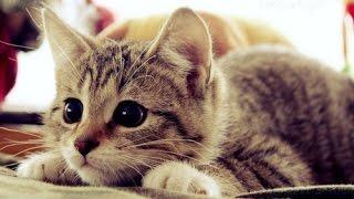 Самые милые котики! ДОРОГИЕ КОШКИ ОТ КОТОРЫХ У ВАС БУДЕТ ШОК!