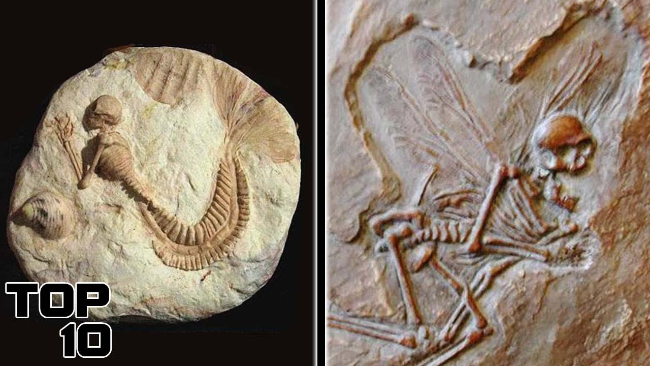 Download Top 10 Signs Of Alien Life Found In Fossils