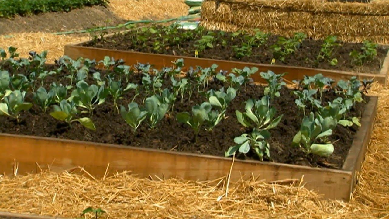 8X8 Raised Garden Plans | Gardening: Flower and Vegetables