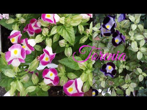 Winter Flowers !!