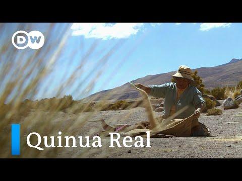 El sector de la quinua real boliviano busca el equilibri