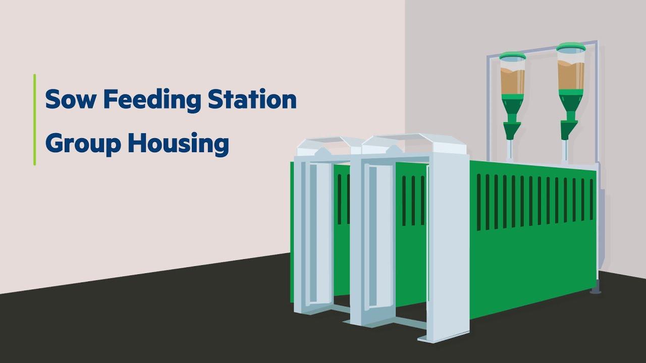 Feeding Solution   Sow Feeding Station - Group Housing