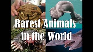 Strange Animals You Probably Didn't Know Exist