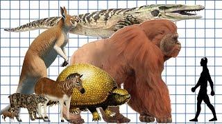 Cenozoic Beast: A size comparison