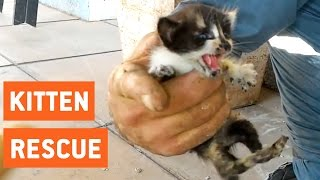kittens rescued from water pipes animal rescue