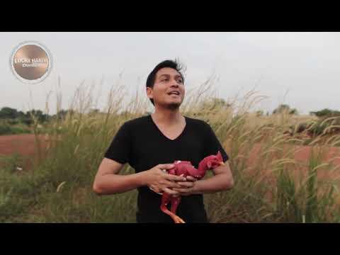 Lucky Hakim Main Sama Ayam Tanpa Bulu