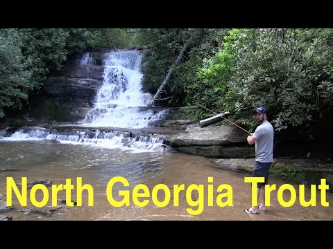 North Georgia Trout Fishing