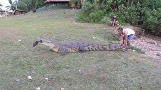 Панамские Будни #16. Четырехметровый Крокодил