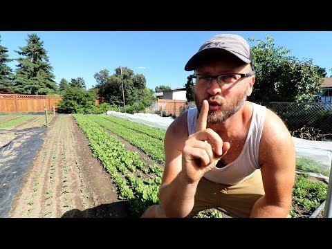 My Secret to healthy crops in the hot summer!