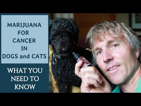 Marijuana for Cancer in Dogs and Cats