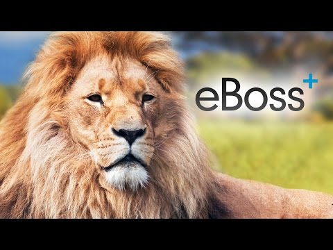 How to mass manage database clients | eBoss Recruitment Software