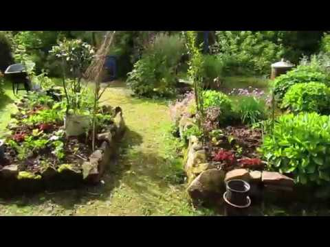 Permaculture Fruit Forest of Incredible Abundance in Ireland! (Part 1)