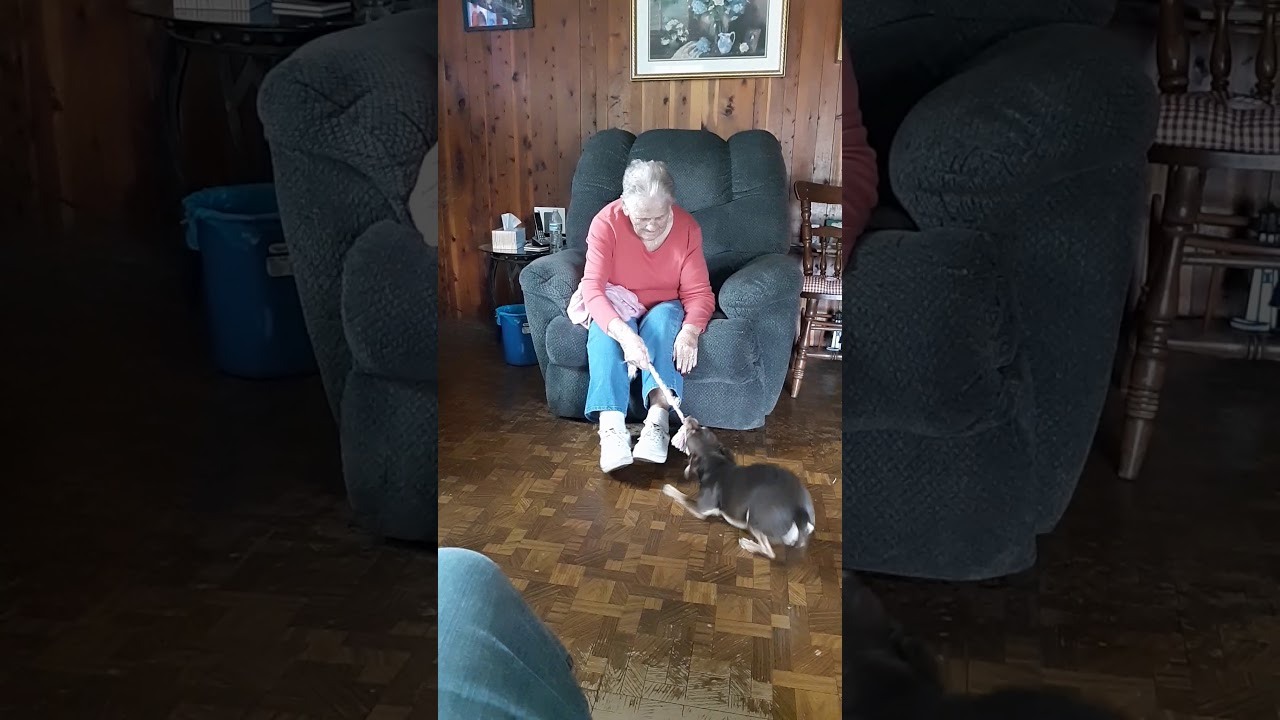 Dog Plays With Grandpa With Alzheimers And Their