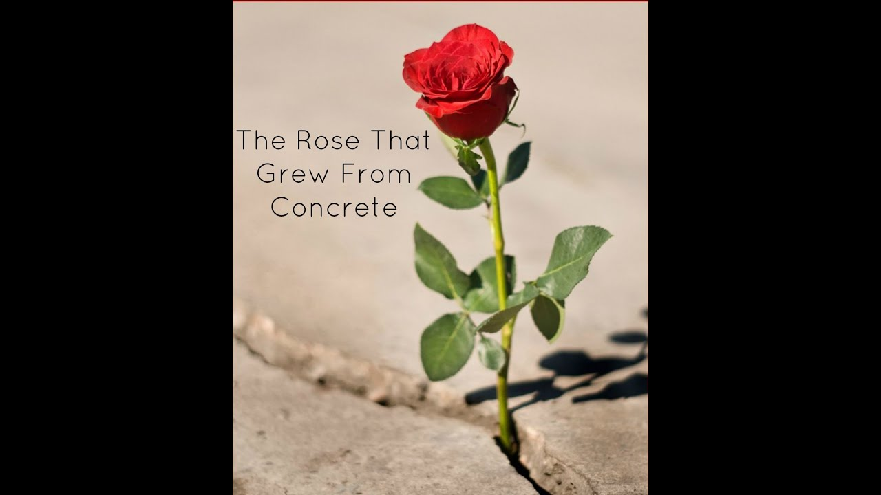 THE ROSE THAT GREW FROM CONCRETE EBOOK