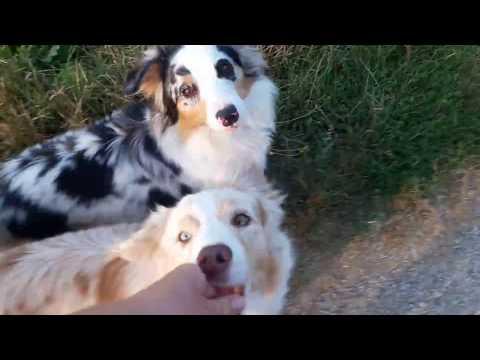 Hundebegegnungen üben | Wie wir es geübt haben, entspannt an anderen Hunden vorbei zu gehen