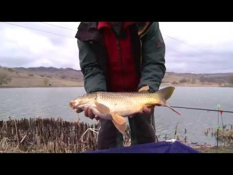 Pescuit la crap în ape reci