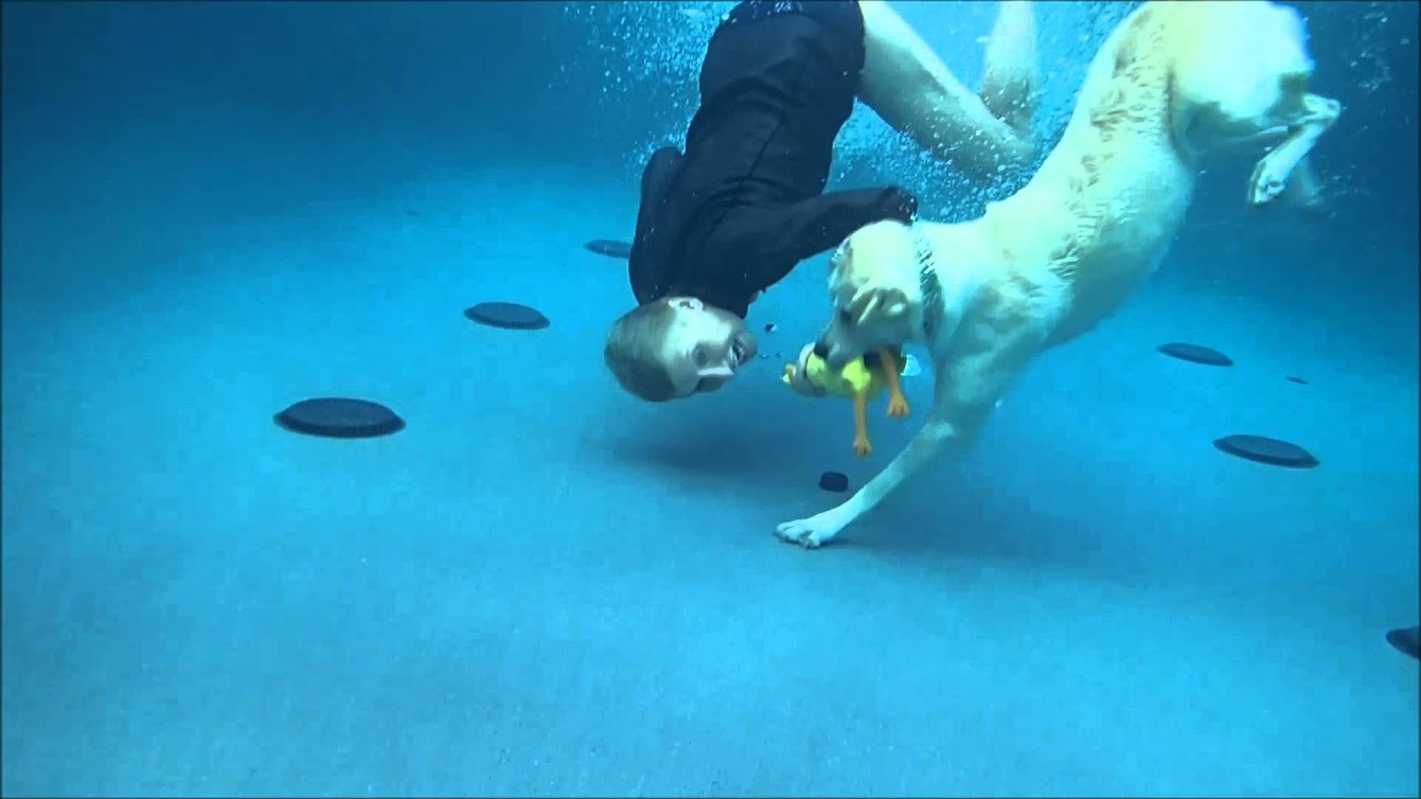Labrador Retriever & mom dive to her to bottom of swimming pool