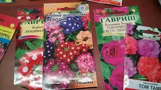 Однолетники   цветущие все лето
