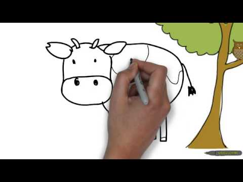 Intro to Animals and Functions