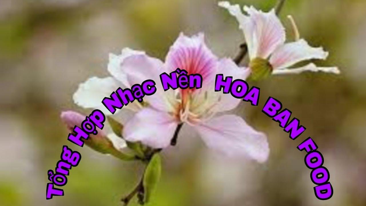 Nhạc Nền của TÂN HOA BAN FOOD   FULL