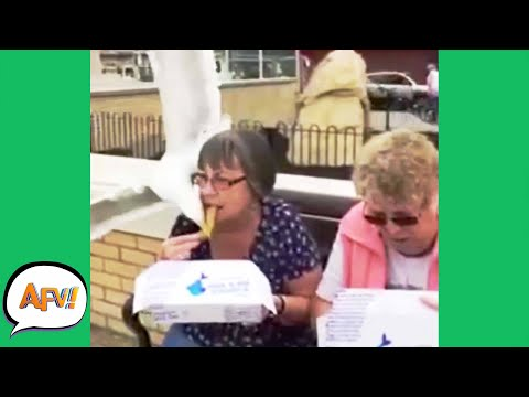 SNATCHED The FAIL Right Outta Her Mouth! 😅 | Funniest Fail | AFV 2020