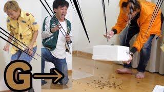【惨劇】部屋に解き放たれた無数のゴキブリを確保せよ!!!