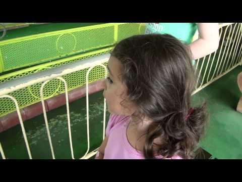 Betting on the Duck Races - Wonder Rakutechi Japan - Most Bizarre Amusement Park Attraction EVAR