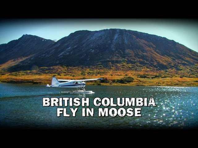 CITR1109-British Columbia Fly In Moose (Teaser)
