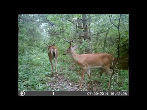 Pennsylvania Trail camera pictures