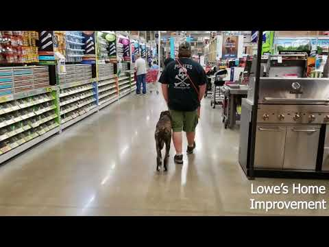 16 month old Mastiff Mix (Xena) | Incredible Transformation | Best Arkansas Dog Training