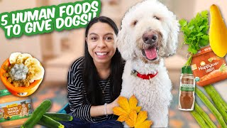 5 Grocery Store Finds to Buy for DOGS  DIY Treats for Fall!!!!