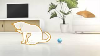 10 способов снять стресс у кошки - рацион Hill's